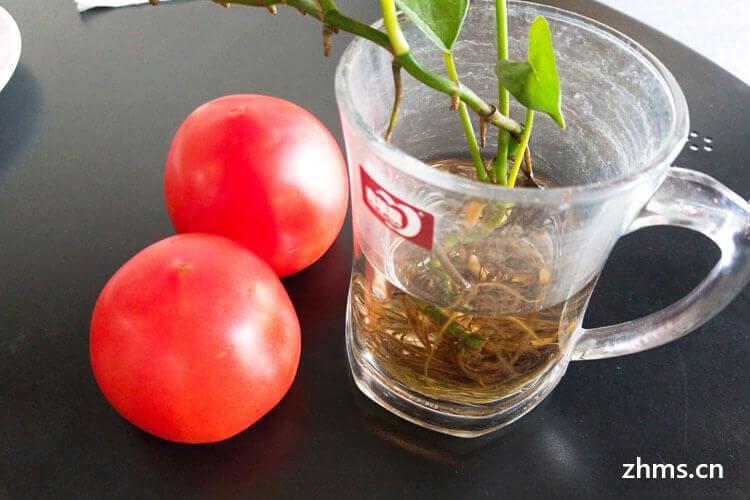 有点坏了的西红柿还可以吃吗?食用西红柿的注意事项?