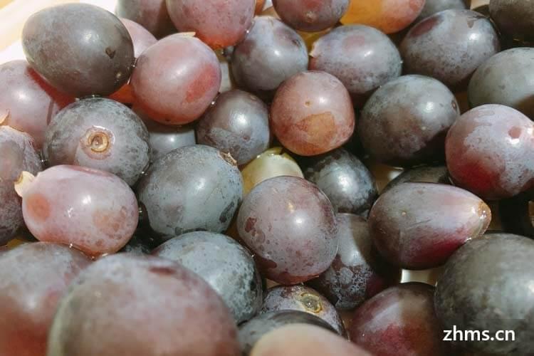 夏黑葡萄与巨峰葡萄哪个品种好