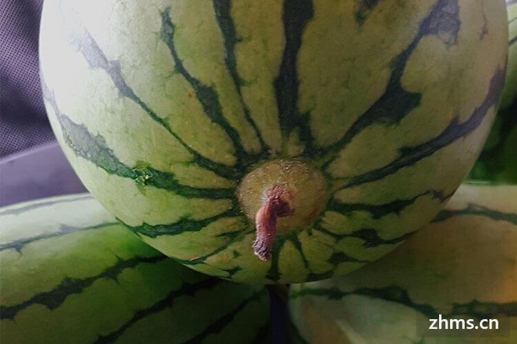 处暑吃西瓜吗