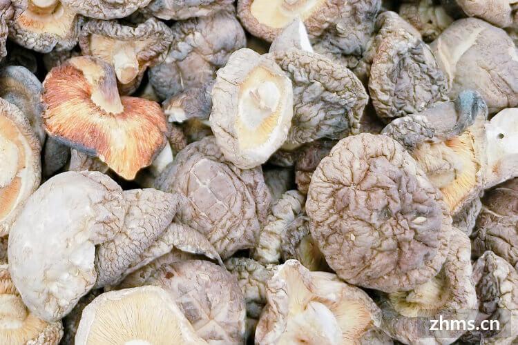 香菇炒什么好吃又营养?香菇可以和扁豆一起吃吗?