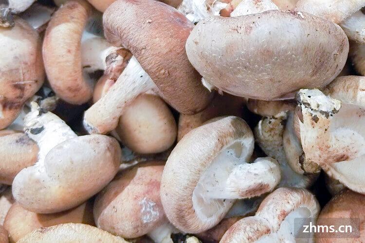 买了一些香菇回家,今天想做香菇了,香菇用焯吗?
