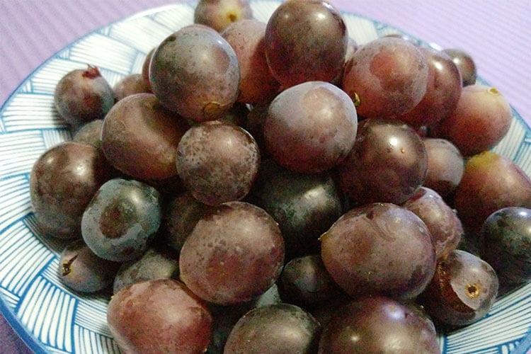 买了一些红提子,红提子与葡萄的区别?