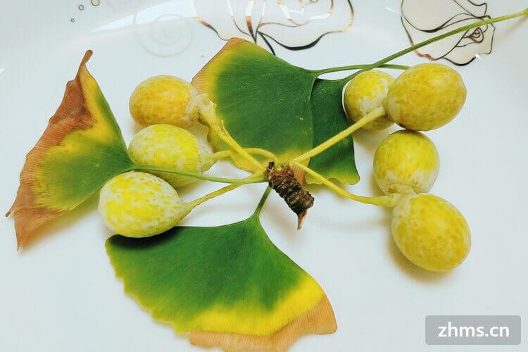 白果的作用及白果的食用方法有哪些