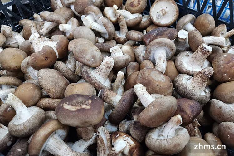 蘑菇炒肉怎么做最入味?很多人错在这一步