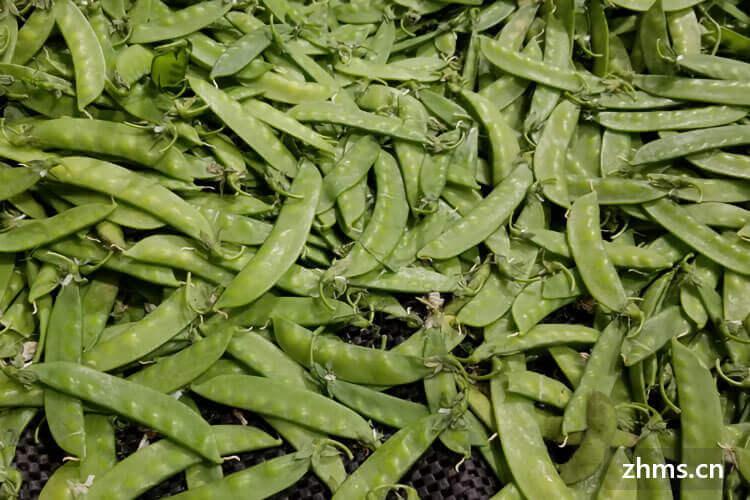 荷兰豆的营养价值
