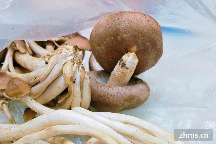 今天买了一些香菇回家想做炒香菇了,香菇怎么炒好吃呢?