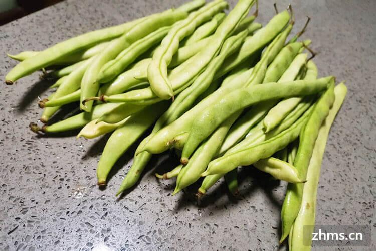 广州反季节蔬菜