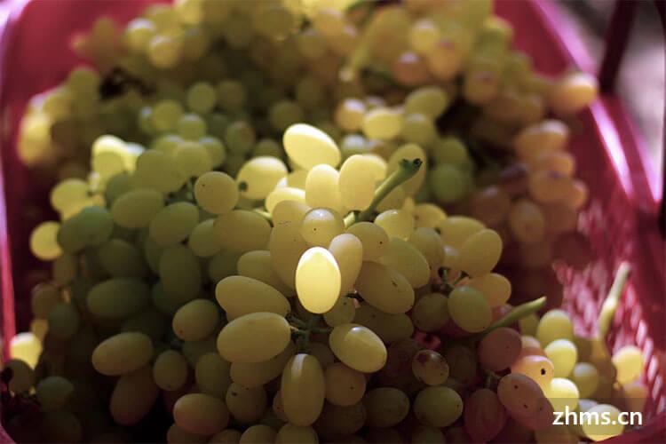 葡萄哪个品种最好吃