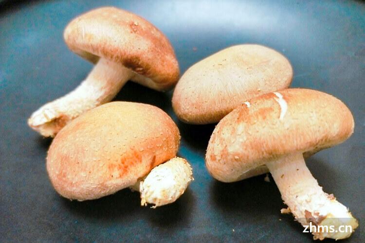 香菇与花菇有什么不同,你肯不知道吧