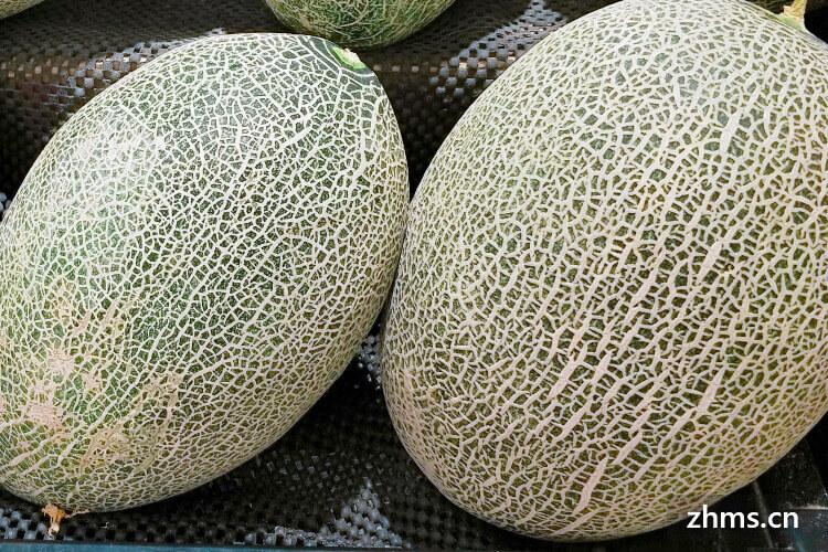 新疆哈密瓜好吃吗?看到很多人都在说新疆哈密瓜。