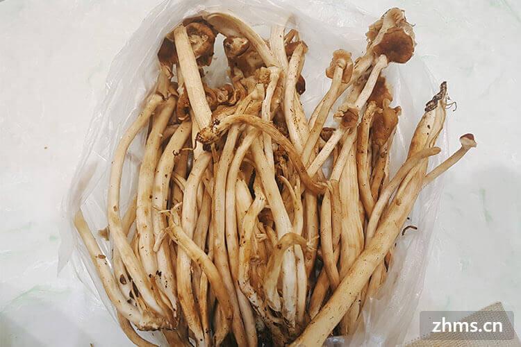 茶树菇水饺