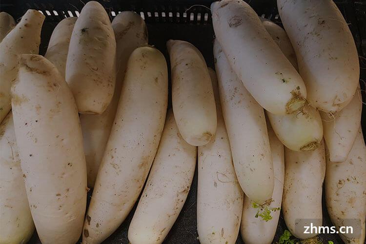 吃白萝卜可以减肥吗