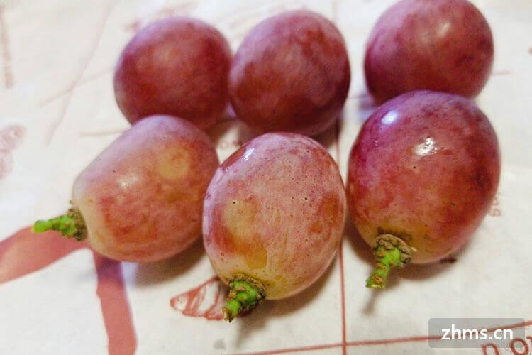 红提是什么季节的水果