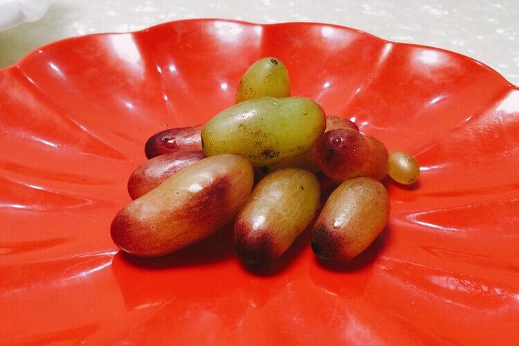 想要自己种植葡萄,不知道葡萄大棚怎么搭建?