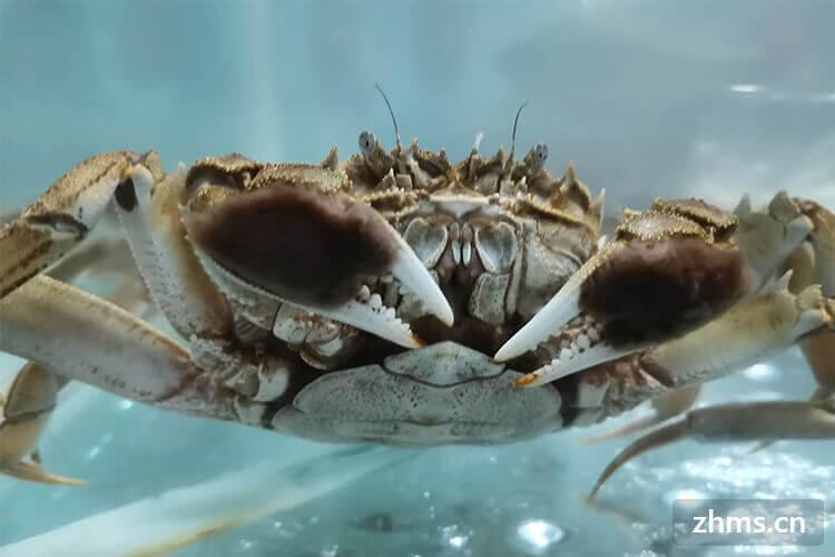 螃蟹吃法有哪些