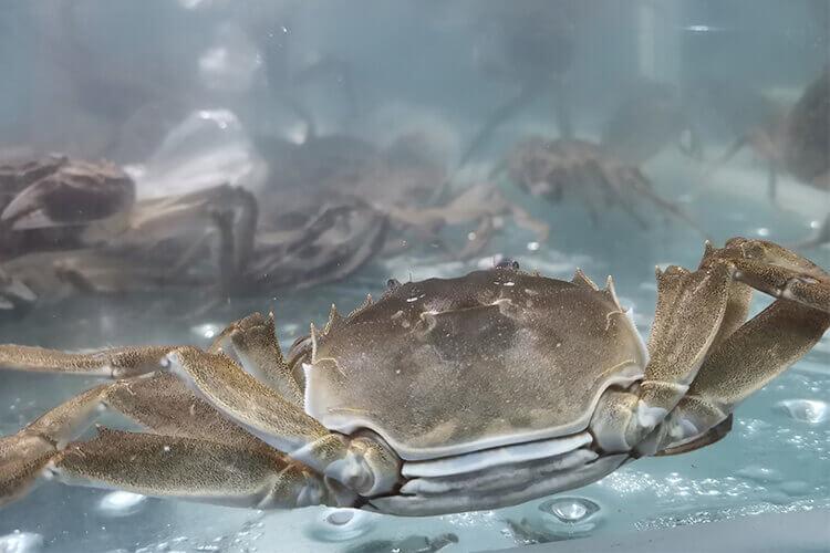 秋天螃蟹的特点有哪些?螃蟹可以怎么吃?
