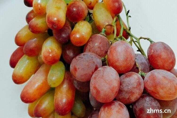 葡萄品种有哪些