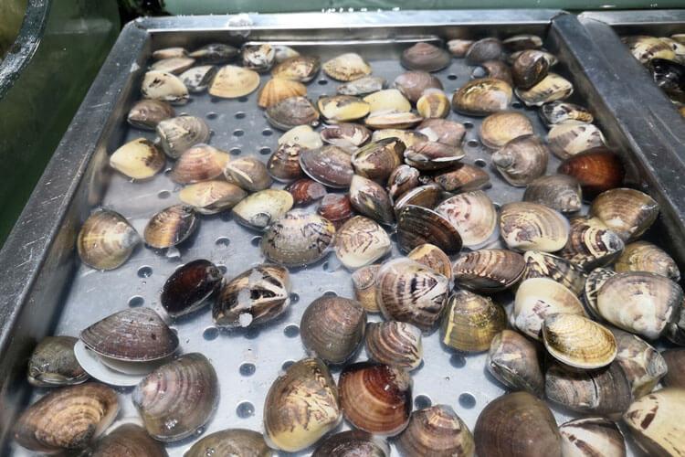 文蛤煮熟后放冰箱可以放几天,有没有人知道的呢?