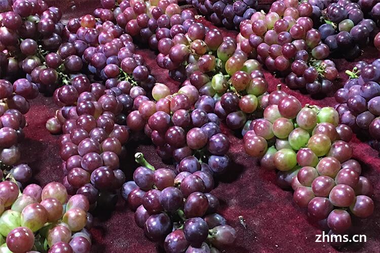 哪种葡萄最好吃最甜