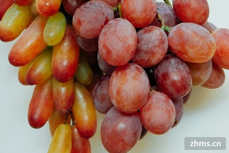 巨峰葡萄种植技术有哪些