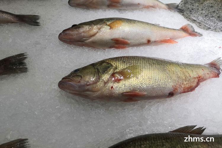 腊鱼是淡水鱼还是海鱼?