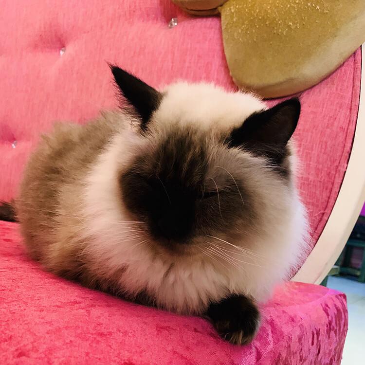 猫咪餐厅:给你云养猫的线下体验!