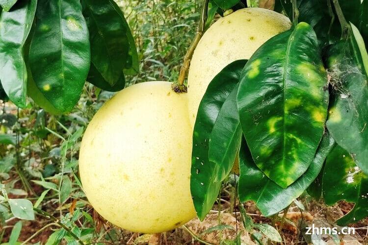 中秋吃柚子代表什么