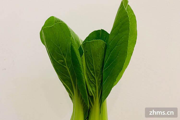 美味的青菜怎么吃?青菜的做法大全来味道!