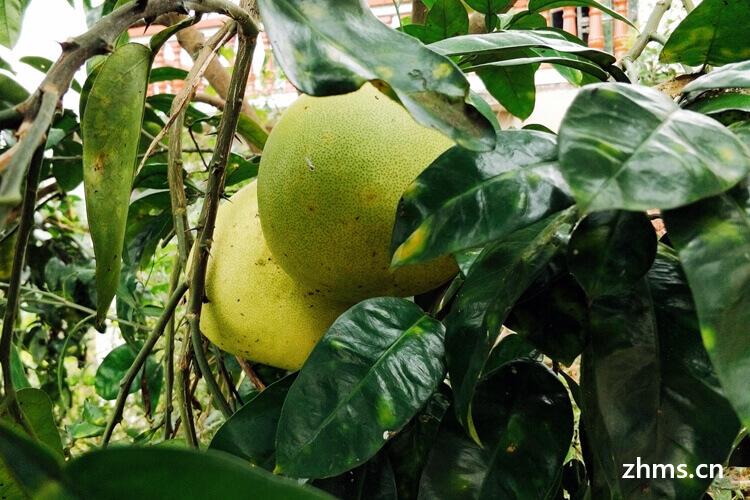 柚子的选择方法有哪些