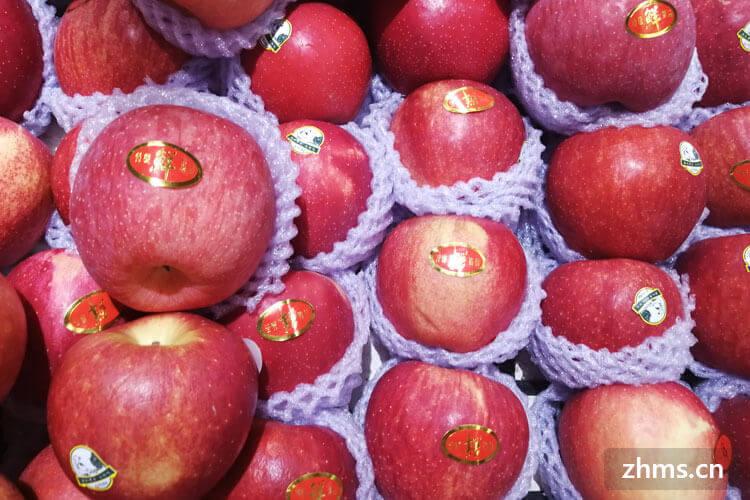 想要自己在家里种一点水果,请问什么水果在春天播种