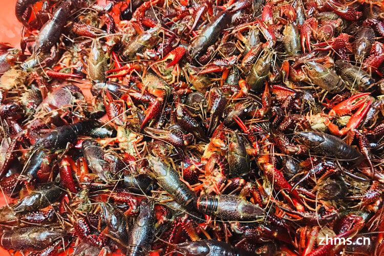如何清洗小龙虾?三步完成小龙虾的清洗过程