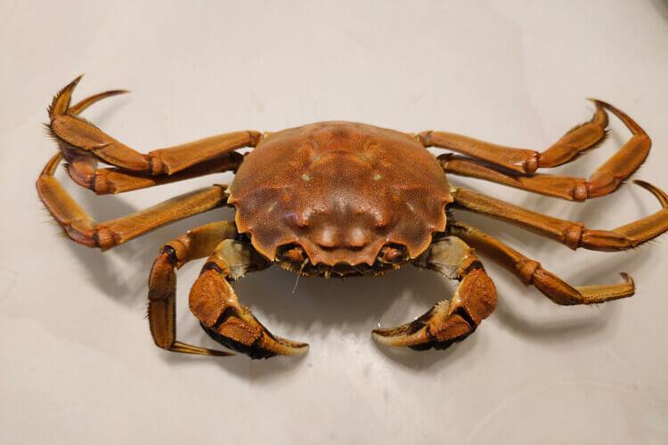 螃蟹买多了只能两层上锅蒸了,请问两层螃蟹要蒸多久呢?
