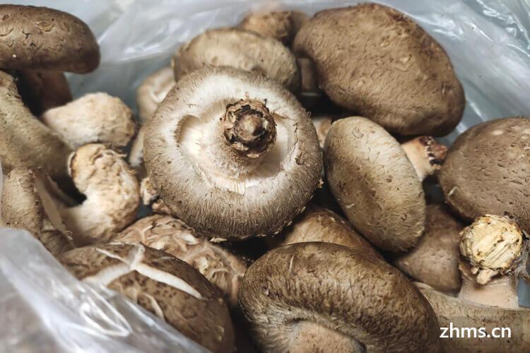 用香菇炒青菜特别的好吃,香菇切片好难切怎么办