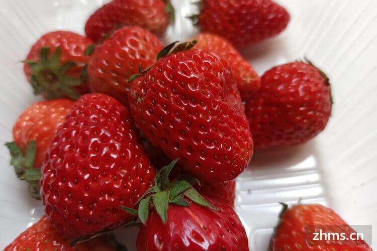 草莓为啥用盐水洗