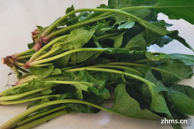 想问一下菠菜是菠菜苗吗,如果不是,菠菜苗是什么?