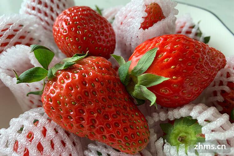 广东草莓几月份有?