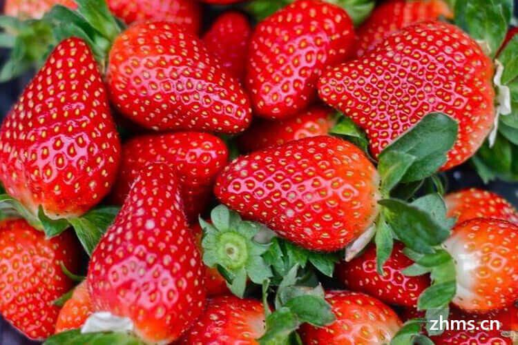 如何选巧克力牛奶草莓