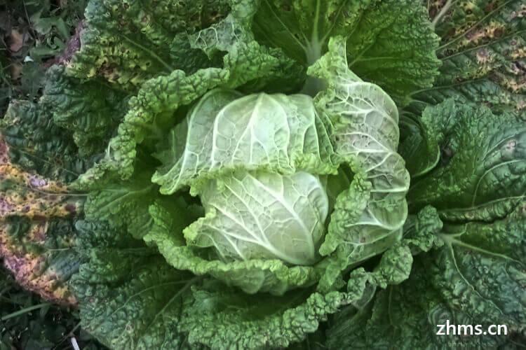 处暑节气种植哪些菜