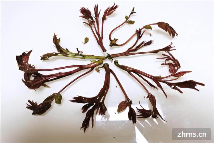 谷雨后的嫩香椿可以吃嗎?那怎么挑選香椿呢?