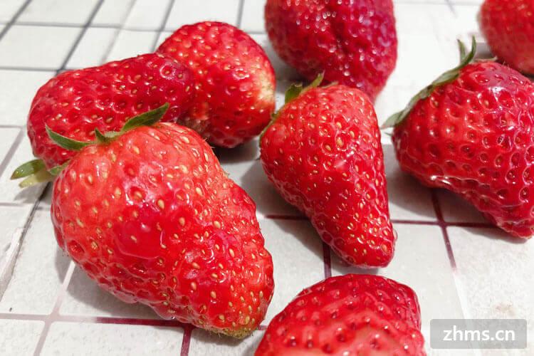 草莓主要产地在哪里