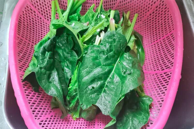 日本大叶菠菜和普通菠菜的区别在哪里呢,哪种菠菜比较好吃呢?