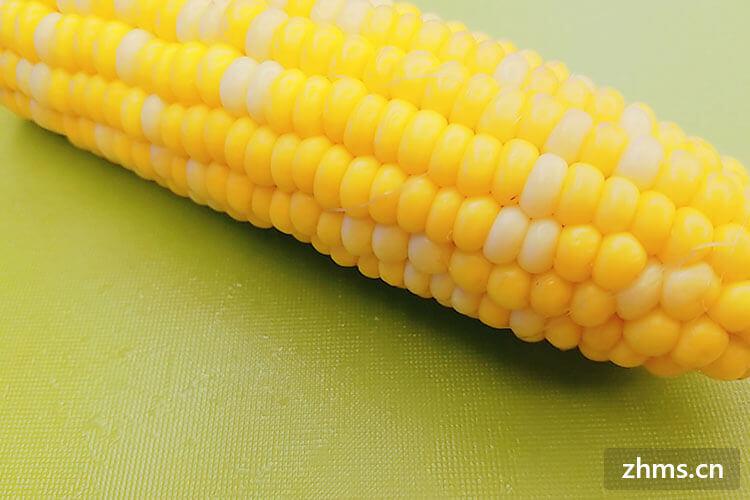 蒸玉米多久能熟