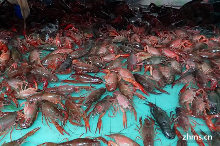 杨四龙虾相似图