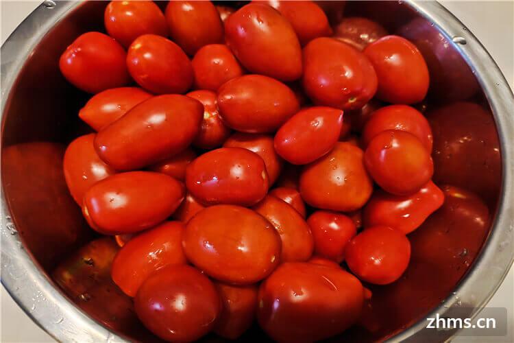 圣女果和西红柿的区别有哪些
