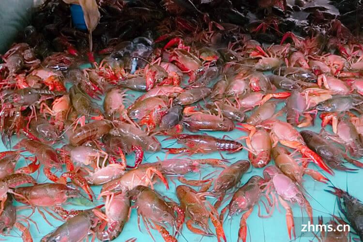 你了解市场上的小龙虾生虾价格吗?