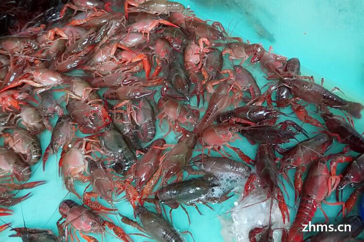 北京的牛蛙麻辣小龙虾有加盟店吗