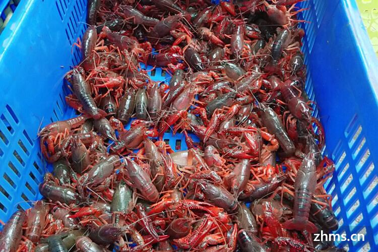 朱大龙虾相似图