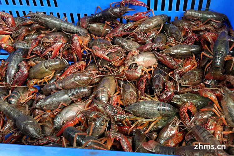 秘辣小龙虾相似图片2