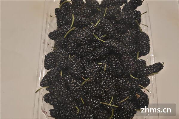 黑树莓是桑葚吗?黑树莓和桑葚有什么区别?