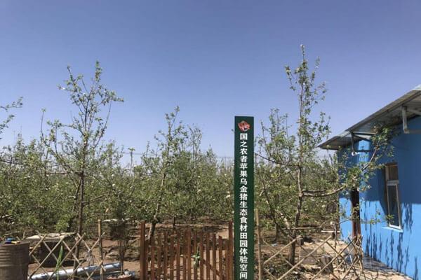 国之农者乌金猪变身绿色健康的生活标签